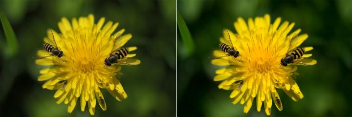ISO200, 60mm F/4.5. Pa kreisi JPEG, pa labi RAW
