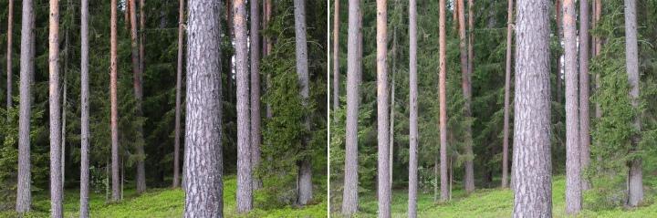 Nedaudz pāreksponēts attēls, kurā labi redzēt, kā darbojas kameras JPEG ģenerēšana