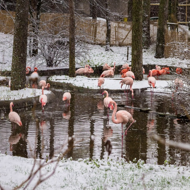 VO_211740_flamingi