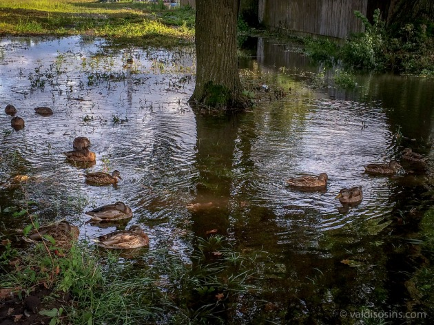 Plūdi